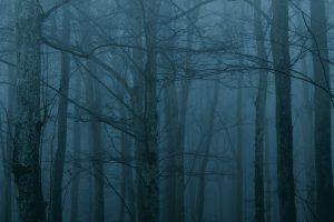 bosque tenebroso – miedos infantiles